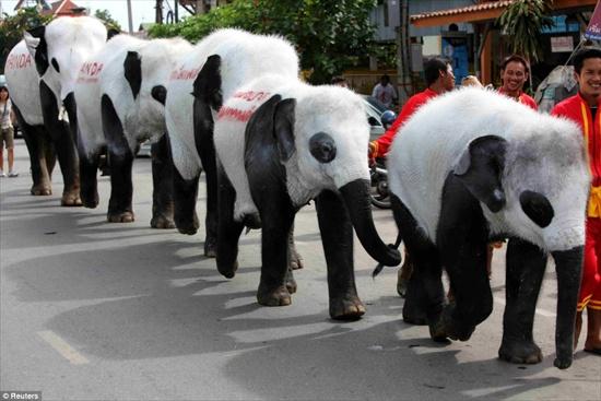 elephantpanda3