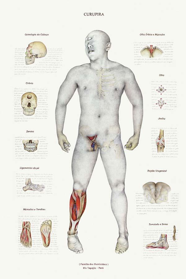 anatomymyth3