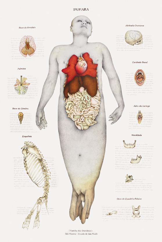 anatomymyth4