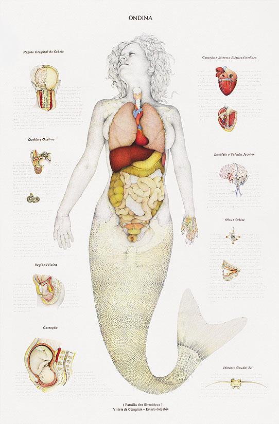 mermaid-anatomy