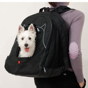 pet-laptop-case