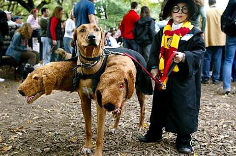 potterdog