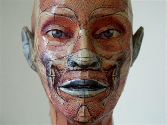 anatomy-papercraft