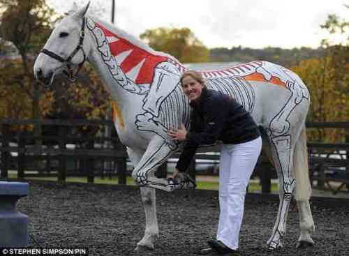 Horse Used As Live Anatomical Model Gearfuse