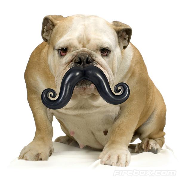 dog-mustache1