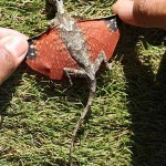 Real Life Dragon Found in Indonesia