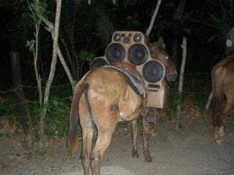 Pimp My Donkey