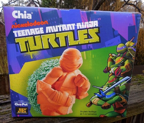 turtle-chia1