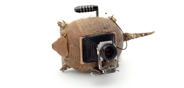 animal-camera2