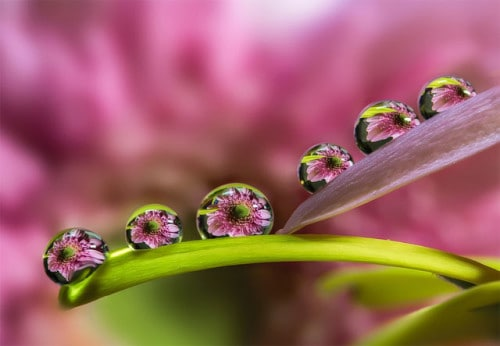 Dew Drops On Flower By Miki Asai