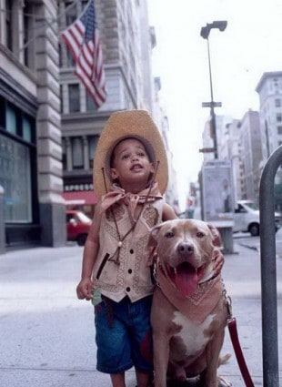 10 Pit Bull Pics We Wish Everyone Could See Gearfuse