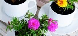 Teacup Planters