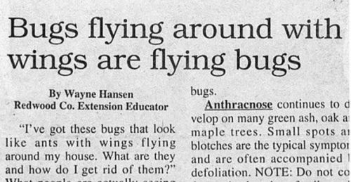 Bugs With Wings