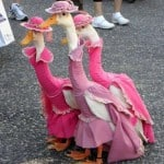 Geese In Dresses