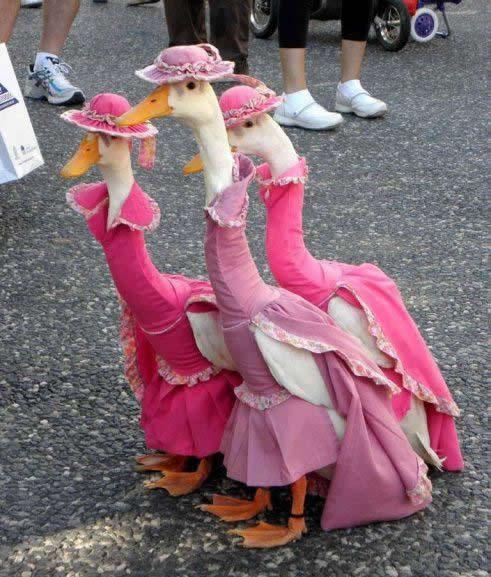 Geese In Dresses