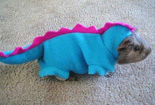 Guinea Pig Dinosaur