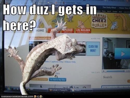 Lizard Computer