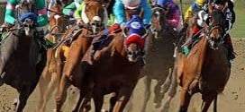An app for dog and horse racing fans who want a techie advantage