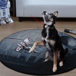 laser-dog-collar