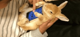 Using Real Living Bunnies As Phone Cases