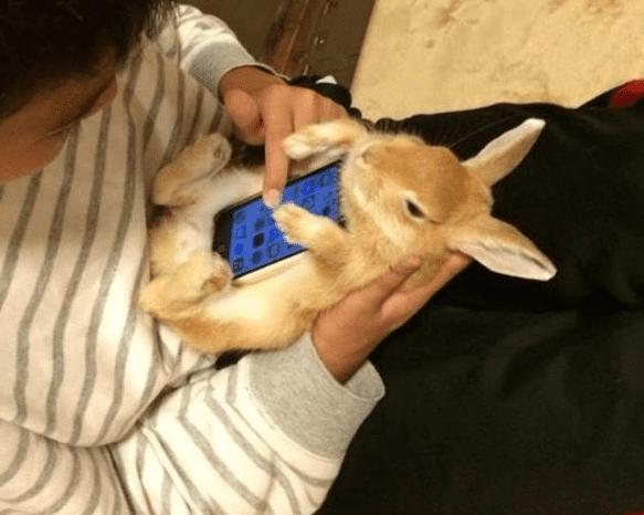 live-bunny-case