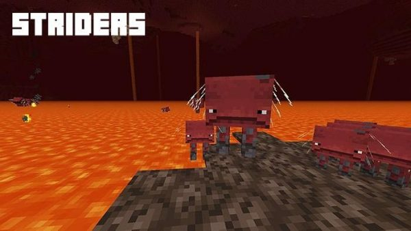 Striders