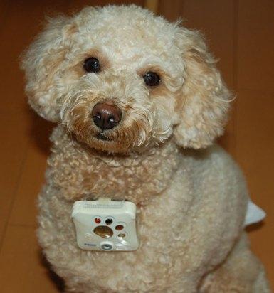 dog_camera_1.jpg