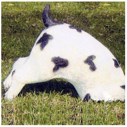 dalmatian_digging_dog.jpg